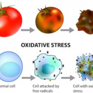 Did you know that ill health derives from damaged and diseased cells?